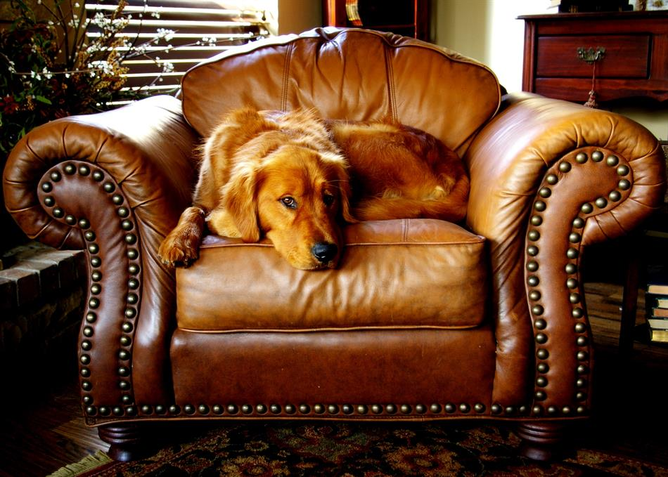 Comfortable Leather Sitting Chair